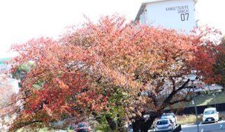 秋色いろいろ!
