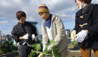 寒空の収穫(2019.12.20)